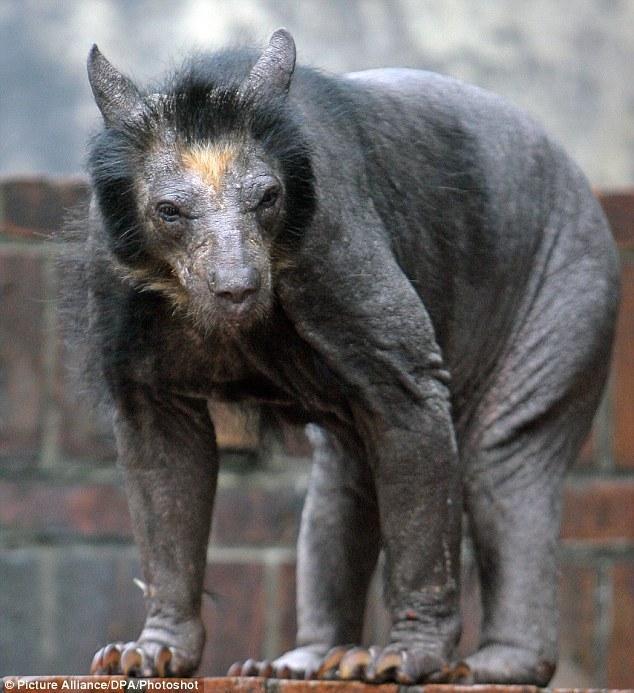 Scarybear